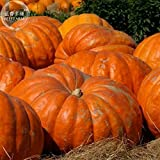 #1261 GIANT GERMAN CROSS PUMPKIN 15 seeds