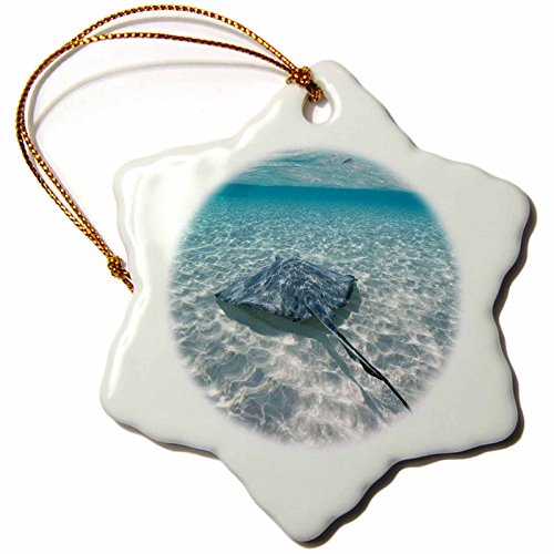 3dRose orn_73262_1 Cayman Islands Southern Stingray in Caribbean Sea Paul Souders Snowflake Decorative Hanging Ornament, Porcelain, (Cayman Islands Wedding)