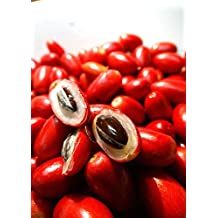 """Miracle Fruit Plant - 6"""" Pot - Synsepalum - End your dependence on sugar!"""