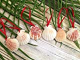 Glitter Seashell Beach Christmas Ornaments, 6