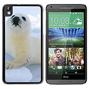 Cute Sea Lion On Icy Block Durable High Quality HTC Desire 816-1 Phone Case