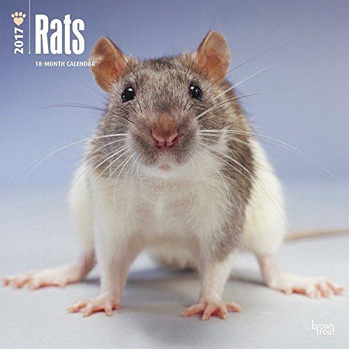 Rats - 2017 Calendar 12 x 12in