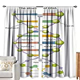 cobeDecor Extra Wide Curtains Educational Colorful Structure of DNA Genetic Code Amino Acids Nucleotides Scientific Study Multicolor Environmental Protection W84 xL84