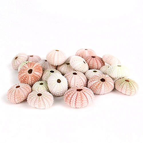 CYS Colorful Sea Shells, Pink-White-Green Sea Urchins Beach Seashells for Nautical Decor - Bulk 25 pcs Sea Urchin Shell
