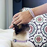Cat Collar Breakaway & Matching Friendship