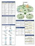 Scientific Lab Notebook: 70 Carbonless Duplicate