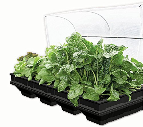 Vegepod Raised Garden Bed With Cover - Large by Vegepod