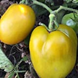 verde tomato seeds - Tomato Seeds - CHILE VERDE - Perfect for Canning - GMO FREE - 40 Seeds