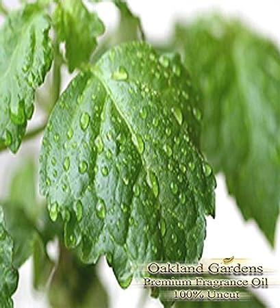 Con aroma a pachuli – General terrenal, dark-cold, ligeramente dulce – Aceite