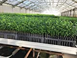 Stuewe & Sons - 2 Tree Seedling Trays (RL98) with