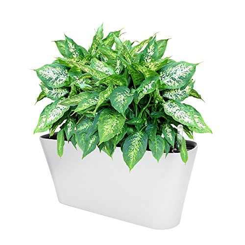 Ergo Self Watering Planter Pot - Indoors, Outdoors Planters Box, Modern White Rectangular Plant Container for Windowsill - Grow Flowers, Herbs Easily, by SavvyGrow (White)