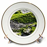 3dRose TDSwhite – Rock Photos - Rock Moss Sunny Day - 8 inch Porcelain Plate (cp_281920_1)