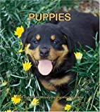 Puppies 2008 Hardcover Weekly Engagement Calendar (German, French, Spanish and English Edition)