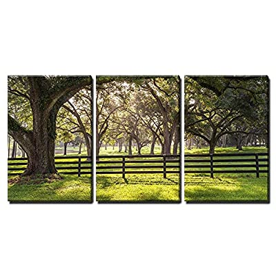 3 Piece Canvas Wall Art - Large Oak Tree Branch with Farm Fence in The Rural Countryside Looking Serene - Modern Home Art Stretched and Framed Ready to Hang - 16