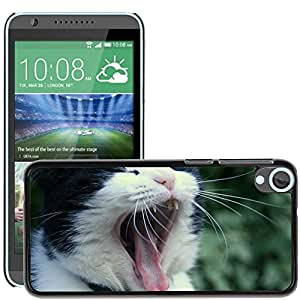 Hot Style Cell Phone PC Hard Case Cover // M00108208 Cat Cats Gaap Animal Pet // HTC Desire 820