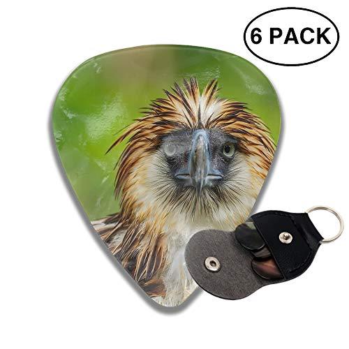 Premium Picks Sampler - 6 Pack Includes Thin, Medium & Heavy Gauges Animal Philippine Eagle Birds Beak Stare ()