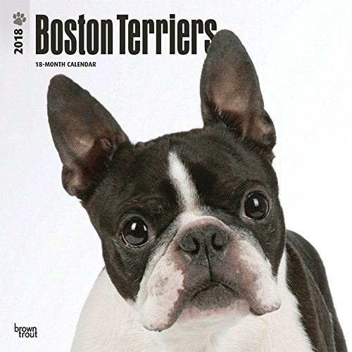 Boston Terriers 2018 Wall Calendar Photo #1