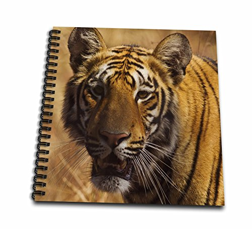 - 3D Rose Royal Bengal Tiger a Close up