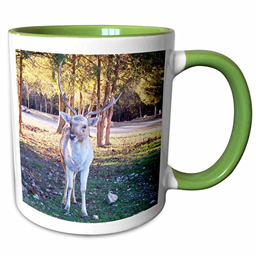 (3dRose Jackie Popp animals - Fallow Deer - 15oz Two-Tone Green Mug (mug_195149_12))