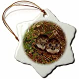 pansy Funny Christmas Snowflake Ornaments Print Of Twin Baby Burrowing Owls In Cape Coral Florida Holiday Xmas Tree Hanging Ornaments Decoration Gifts
