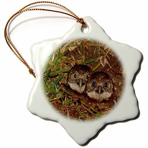 pansy Funny Christmas Snowflake Ornaments Print Of Twin Baby Burrowing Owls In Cape Coral Florida Holiday Xmas Tree Hanging Ornaments Decoration Gifts by pansy
