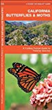 California Butterflies and Moths, James Kavanagh, 1583553568