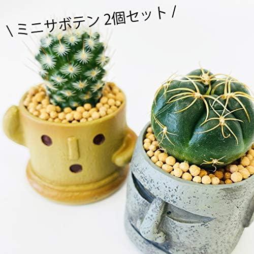 伊豆シャボテン本舗 サボテン 多肉植物 ハニワ&モアイ ポット入り(S)2個セット ミニ盆栽 植木鉢