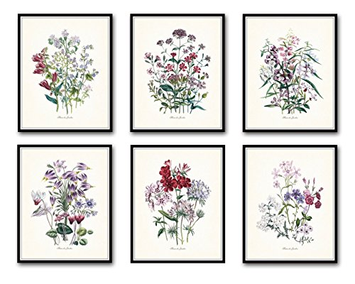 Botanical Print Set 6 Fleurs de Jardin Set No.5 Giclee Botanical Prints Home Decor Wall Art - Unframed