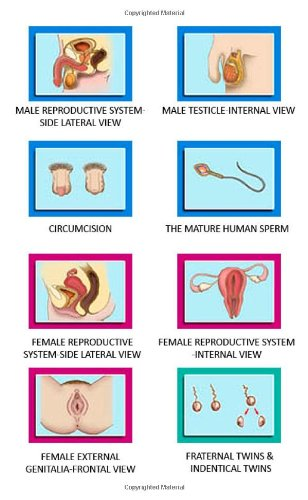 Download PowerPoint Lecture Series on CD, Anatomy: Teaching sexual anatomy and reproductive health pdf epub