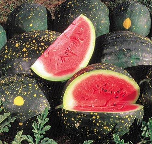 Sweet Yards Seed Co. Organic Watermelon Seeds 'Moon and Stars'– Approx. 10 Open Pollinated Heirloom Non-GMO Seeds