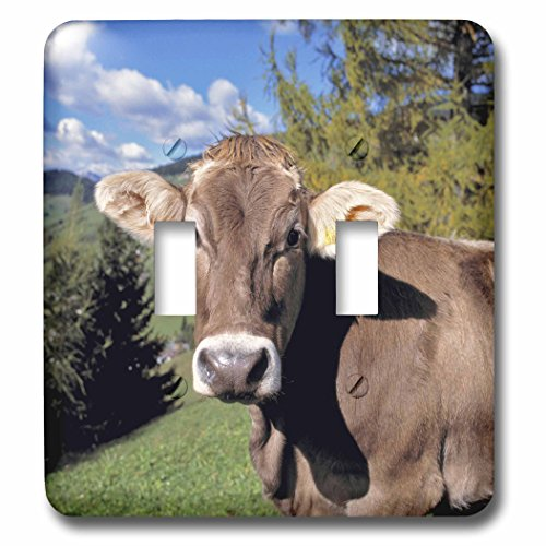 3dRose lsp_82188_2 Italy, Dolomite Alps, Swiss Brown cow ...