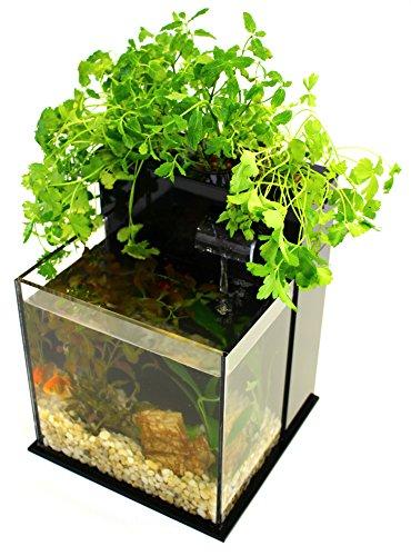 512gRtAF%2B8L - Fin to Flower Aquaponic Aquarium Mini System A