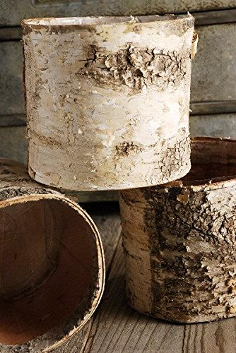 birch pots - 5