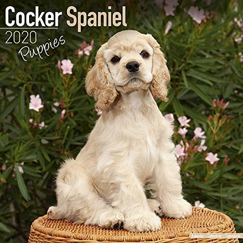 (Cocker Spaniel Puppies Calendar 2020 - Dog Breed Calendar - Wall Calendar 2019-2020)