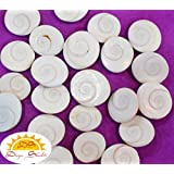 Ramneek jewels Earthenware Divya Shakti Natural Gomti/Gomati Chakra (White) - 12 Pieces