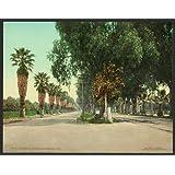 Photo: Magnolia Avenue,palms,trees,street,paved,powerline,Riverside,CA,California,c1903
