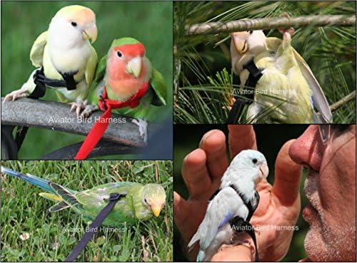 El pájaro Aviator arnés Laisse extensión: Amazon.es: Productos ...