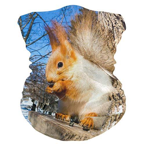 Squirrel In The Winter Forest Outdoor Magic Headband Multifunctional Elastic Seamless BandanScarf UV Resistence Sport Headwear