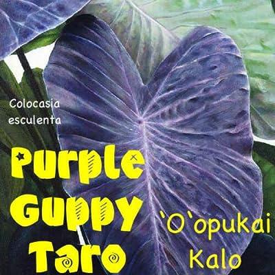AchmadAnam - Live Plant ~Purple Guppy~ Taro Colocasia esculenta Native Hawaiian Elephant Ear Potd: Garden & Outdoor