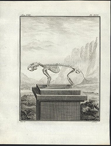 marmot-skeleton-1767-scarce-antique-engraved-print