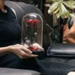 Omonicdesign-Handmade-Preserved-Never-Withered-Real-Rose-Flower-Real-Fallen-Petals-in-Luxury-Glass-Dome-Gift-Lover-Valentines-Day-Anniversary-Birthday-Wedding-Inspired-Beauty-The-Beast