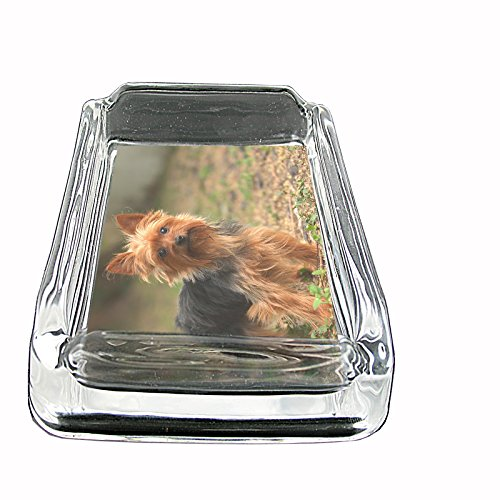 Dog yorkshire terrier Glass Square Ashtray ()