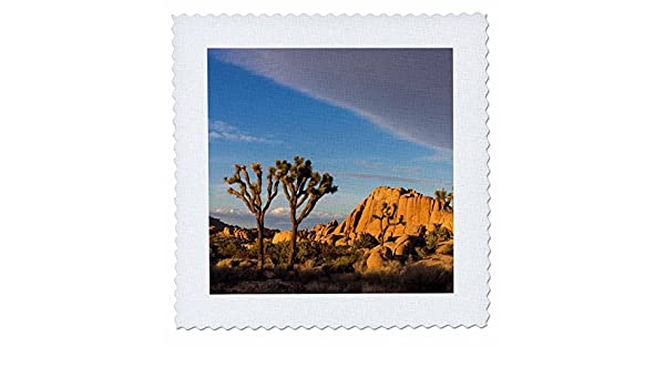 3D Rose Joshua Tree National Park California USA Square 12 by 12 Inch Quilt 12 x 12