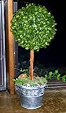 17'' Realistic Artificial Boxwood Topiary Trees / Faux Tabletop Plants l / Boxwood Ball Plant