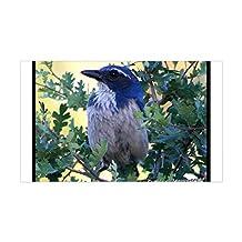 CafePress - Blue Jay Rectangle Sticker - Rectangle Bumper Sticker Car Decal