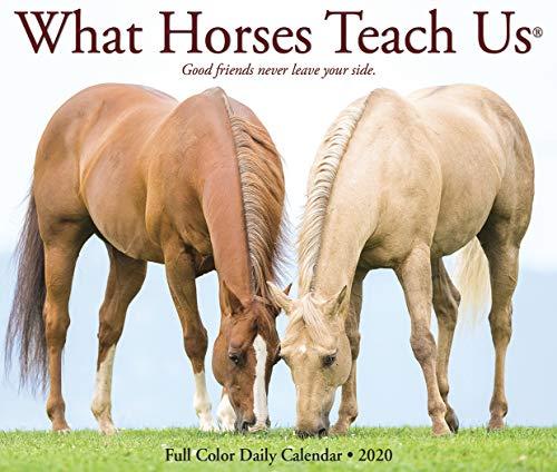 - What Horses Teach Us 2020 Box Calendar