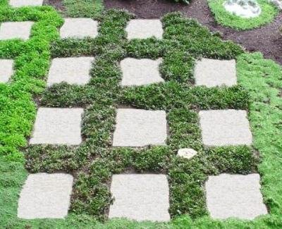 Classy Groundcovers - Bugleweed 'Chocolate Chip' 'Valfredda', A. tenorii {25 Pots - 3 1/2 in.} by Classy Groundcovers (Image #7)
