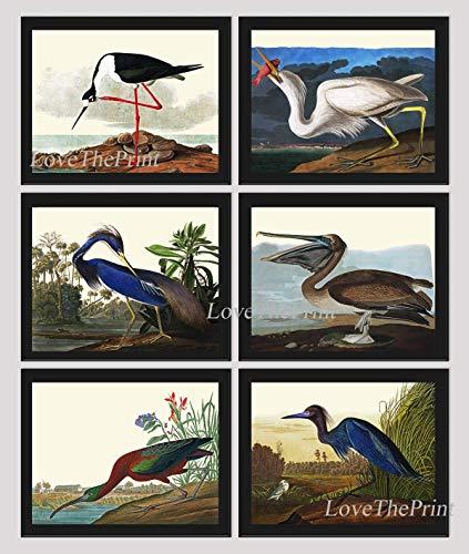 (Bird Wall Art Print Set of 6 Art Beautiful James Audubon Birds Avocet Great White Heron Louisiana Heron Pelican Ibis Blue Crane Illustration Home Room Decor Wall Art Unframed GJ)