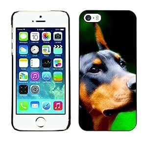 Vortex Accessory Carcasa Protectora Para APPLE iPHONE 5 / 5S - Doberman Pinscher Canine Dog Breed -