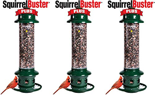 Squirrel Buster Plus 6